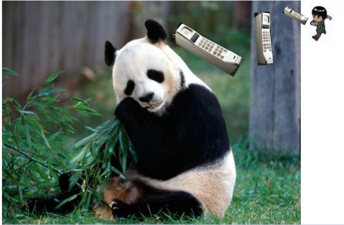 Mountain bike jitsu panda-capture1.jpg