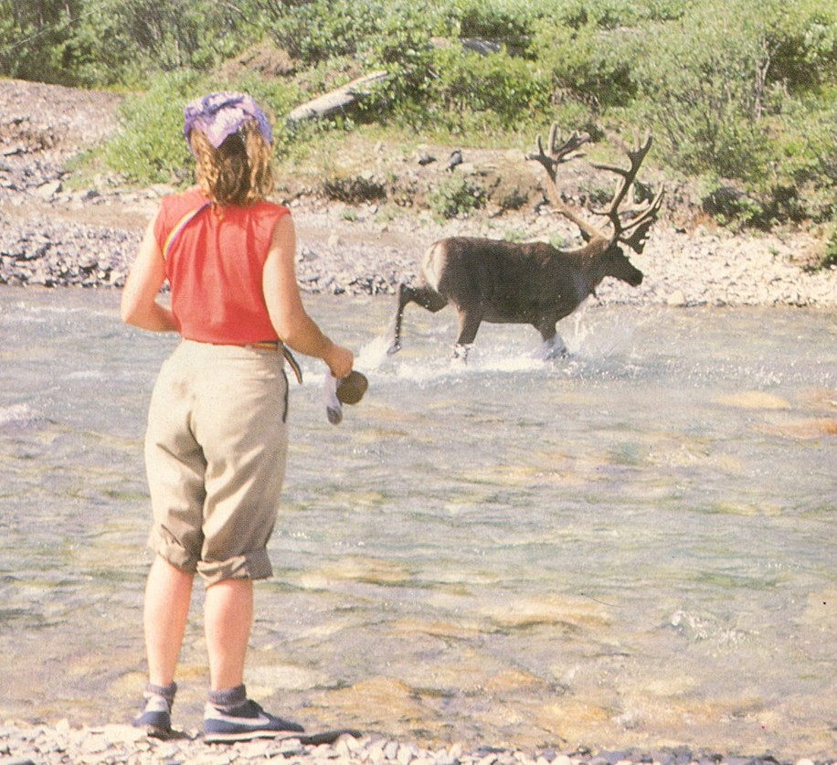 Wildlife you have seen on trail...post your pics...-caribou.jpg