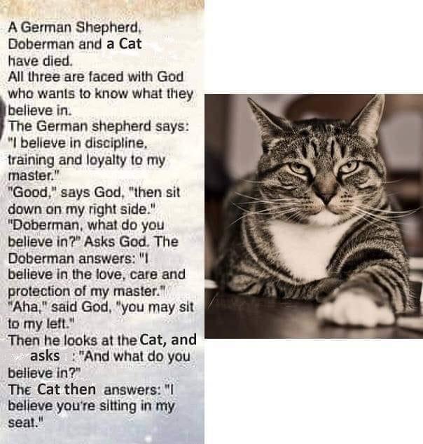 O.C. Official Daily Chuckle thread.... Comic Strip Enhanced...-cat-god.jpg
