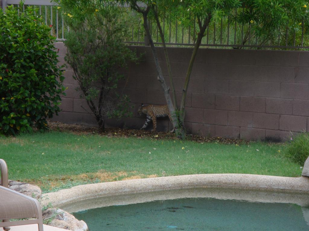 Bobcat on tne trail-cat.jpg