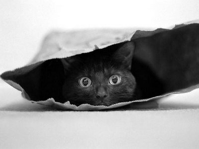 Name:  cat_in_a_bag.jpg