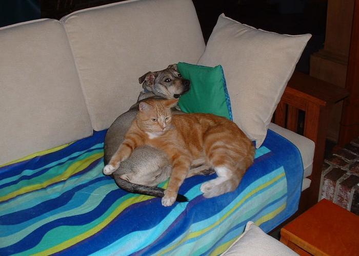 Cat Passion (here kittie, kittie, my new best friend...) Post your cat photos.-catanddog3.jpg