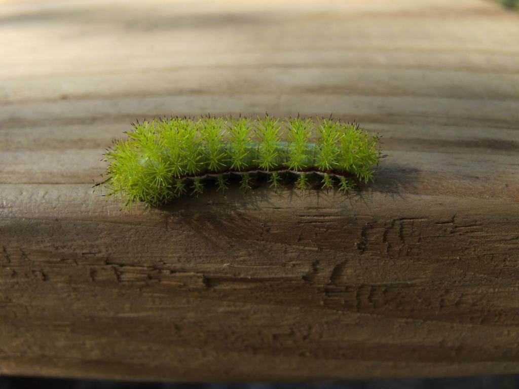 Wildlife you have seen on trail...post your pics...-caterpillar-rezize.jpg