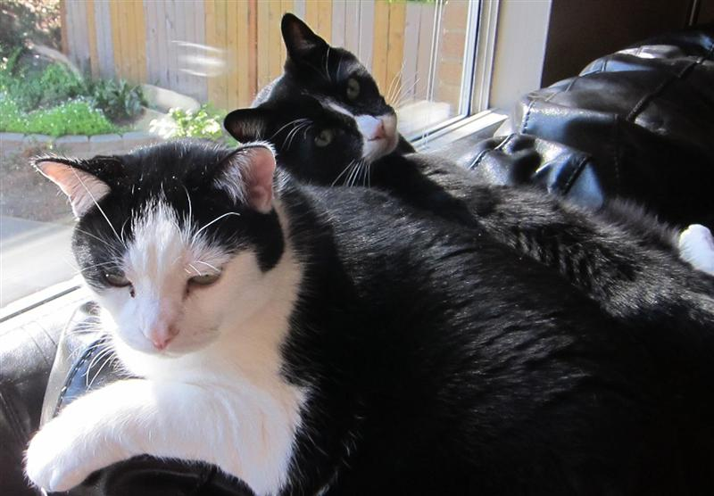 Banshee Spitfire Pics-cats-medium-.jpg