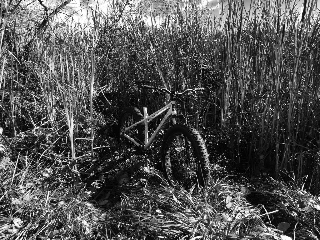One picture, one line.  No whining. Something about YOUR last ride. [o]-cattails.jpg
