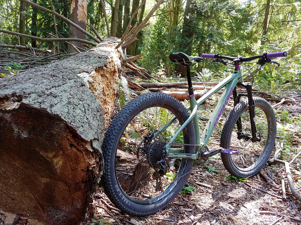 Santa Cruz Chameleon 27+-chameleon_tree.jpg