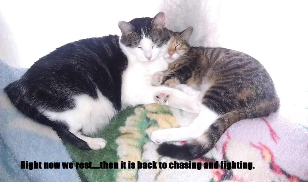 Cat Passion (here kittie, kittie, my new best friend...) Post your cat photos.-charcharpic.jpg