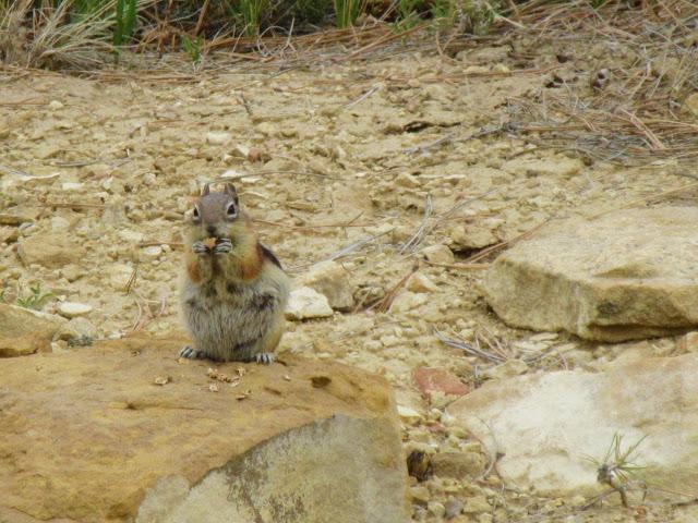 animal encounters-chipmunk.jpg