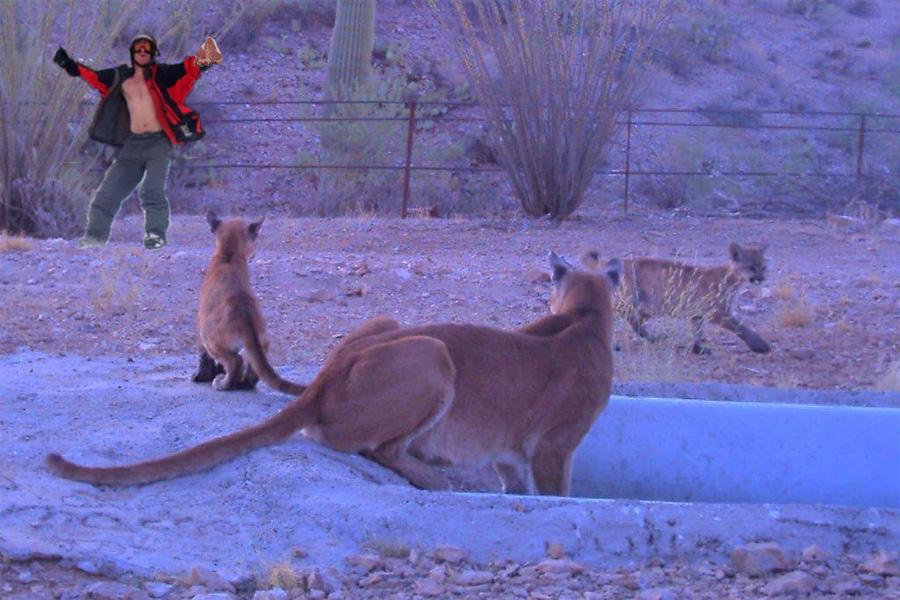 Wildlife-cholla2.jpg