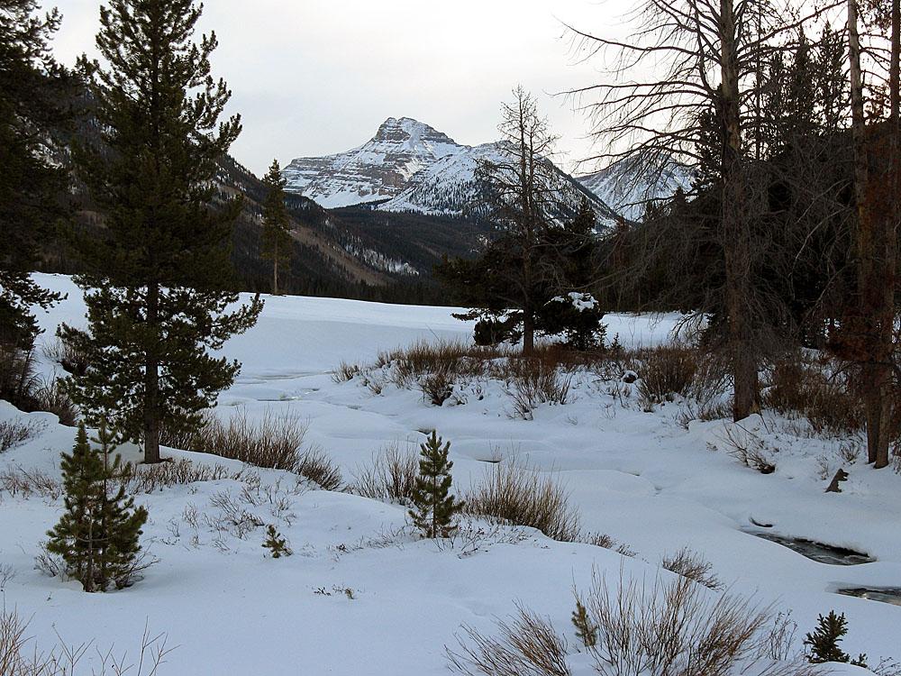 My-did-a-bike-christmas-meadows.jpg