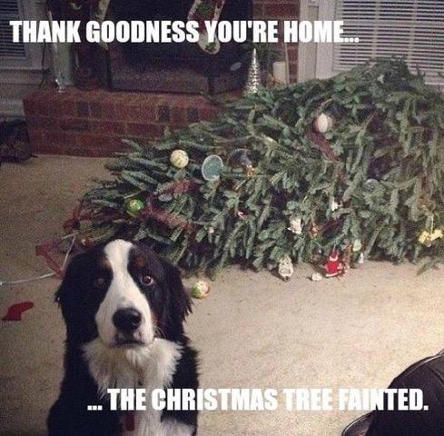 Name:  Christmas tree fainted.jpg Views: 683 Size:  93.3 KB