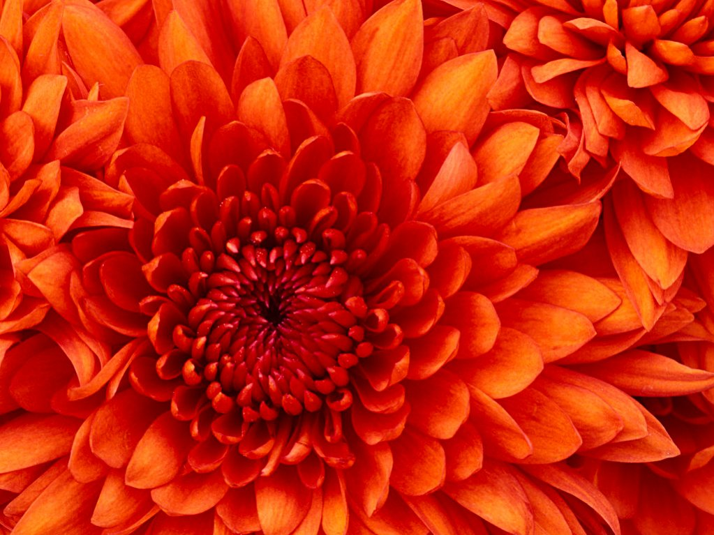 photo upload test-chrysanthemum.jpg