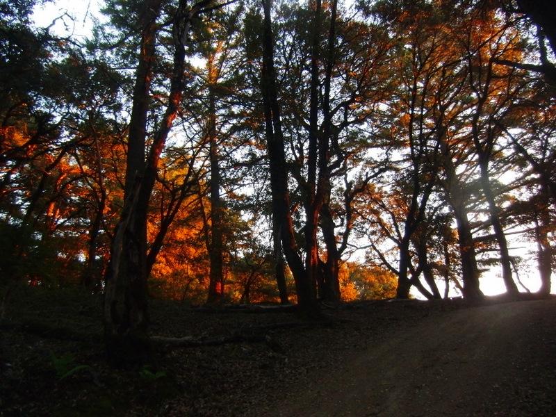 Assignment: Norcal Fall Photos-cimg2585.jpg