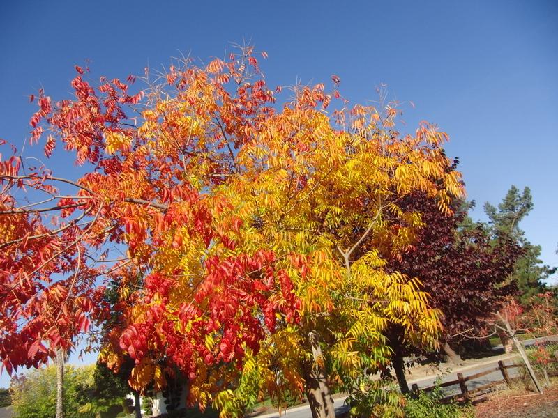 Assignment: Norcal Fall Photos-cimg2714.jpg