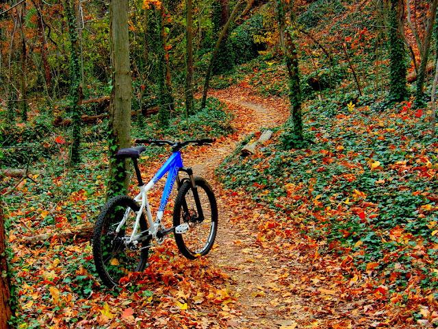 Post Pics of your Fall Foliage!!-cimg7829.jpg