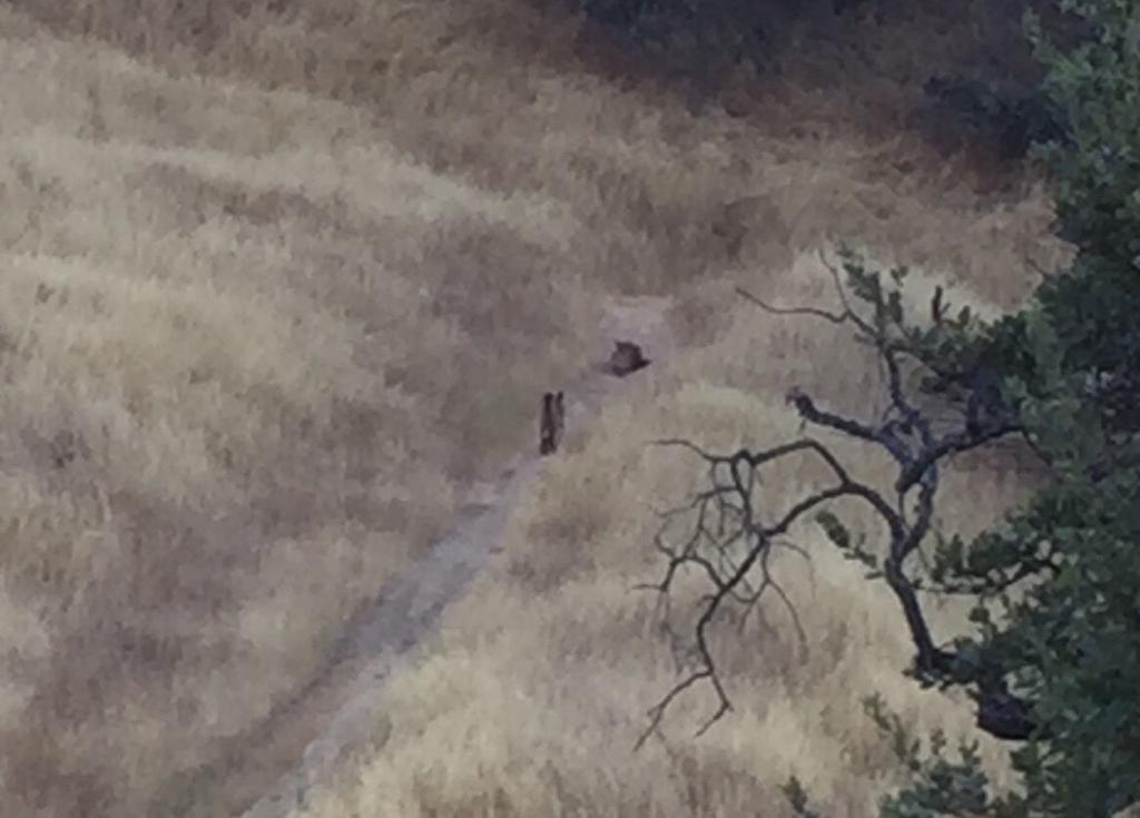 Mountain Lions: Who's seen one?-cixf7mh0krodps0vtl_byojyeyymh0nns-zix3xan2g-2048x1469.jpg