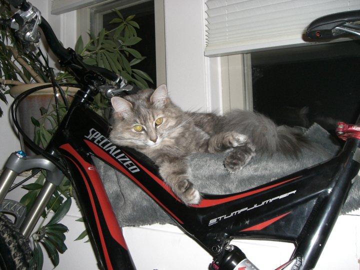 Cat Passion (here kittie, kittie, my new best friend...) Post your cat photos.-cleo-1.jpg