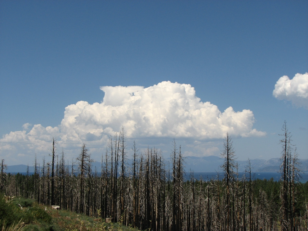 Picture Thread 2010-clouds-burn-trees.jpg