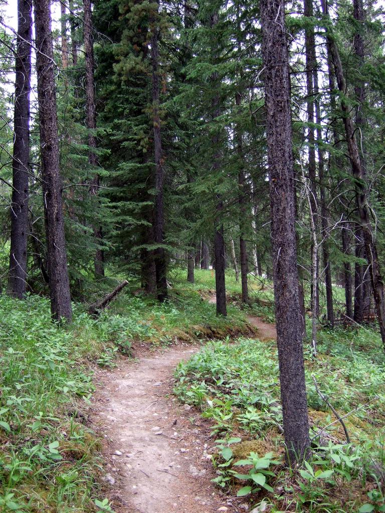 Upcoming Canmore Vacation - rental and trail suggestions-cnc1.jpg