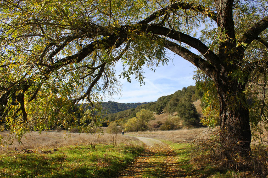 Assignment: Norcal Fall Photos-coe-small.jpg