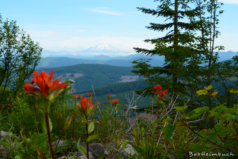 2013 Cold Creek Experience THIS weekend (July 27-28) in SW WA-coldcreek-view-mountain-bob-h.jpg