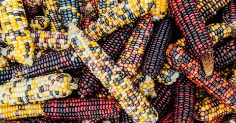 Name:  corn.jpg Views: 13 Size:  87.1 KB