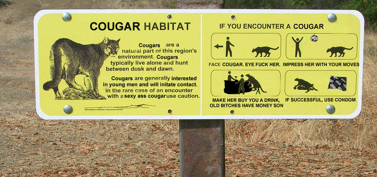 Do cougars attack large, moving objects like us?-cougar-bar-pickup.jpg