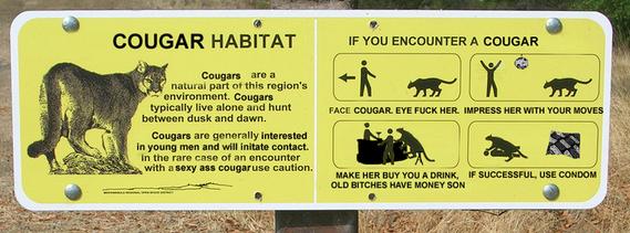 Cougar Alert!-cougar1.jpg