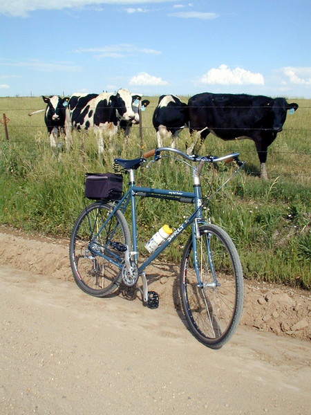 My apprehension with the Disc Trucker-cow-trucker1.jpg