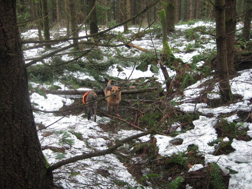 Tokul post storm clean-up?-crazy-ivan_clearing-trees-002b.jpg