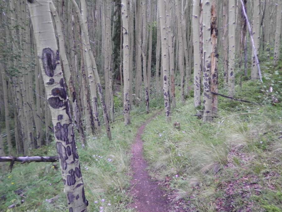 Colorado Trail Race, denied......-ctr-rs-7.jpg