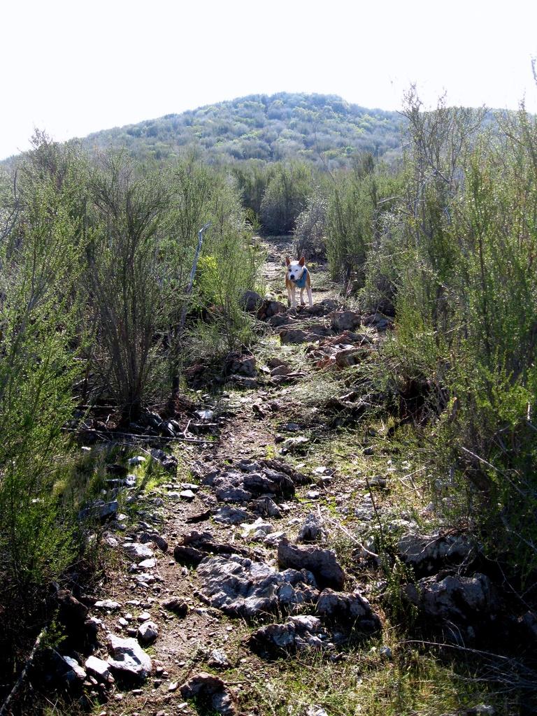 Hogan ride today (Sat)-cut-trail-endo.jpg