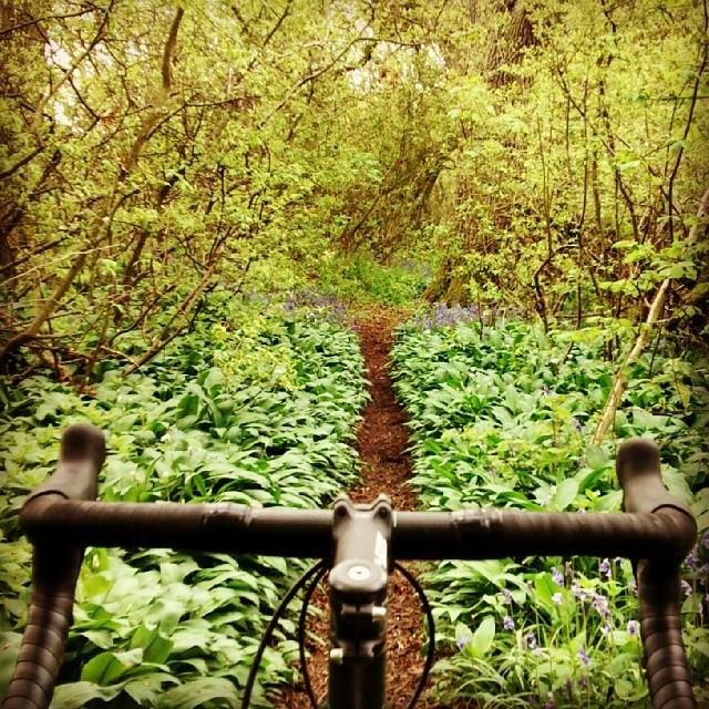 Cross Bikes on Singletrack - Post Your Photos-cx_st.jpg