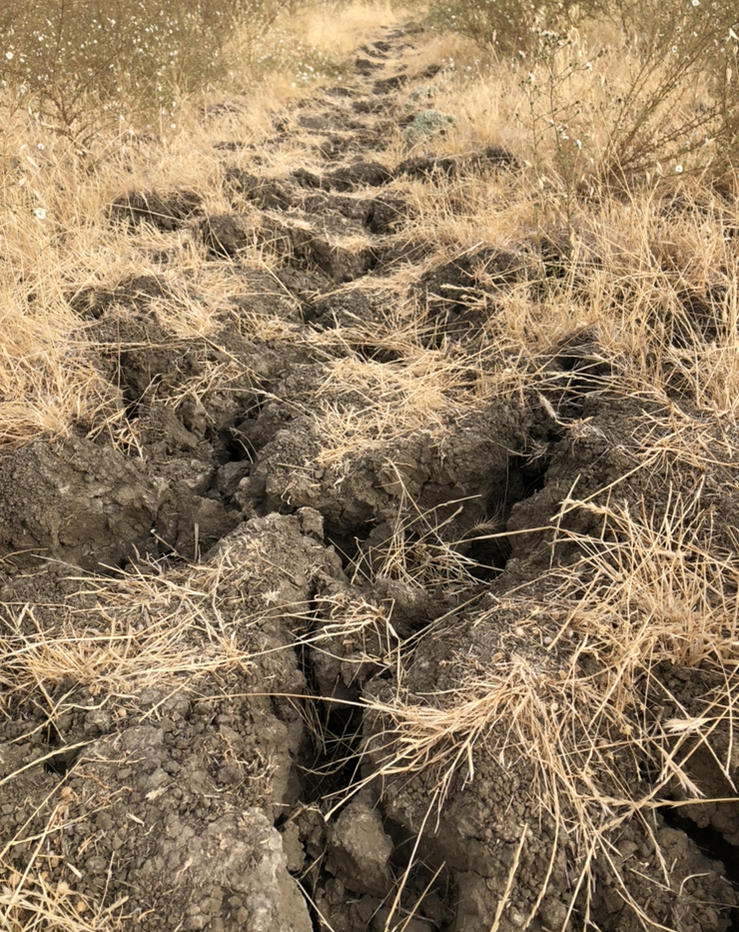 How rough is too rough from a tread perspective before you call a trail done?-d3703a6a-2002-4c8a-8257-f9df8227433d.jpg