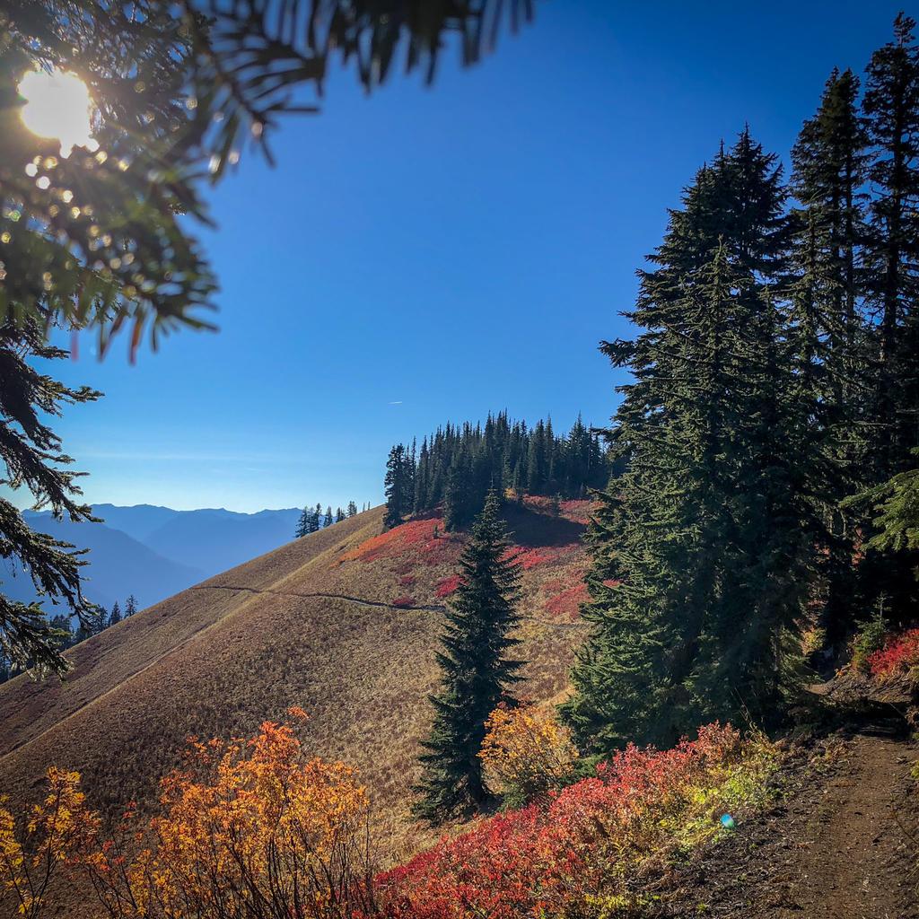 Alpine Baldy - get it before winter!-d4e6bfc993fd5176a24f0ef976b96207.jpg