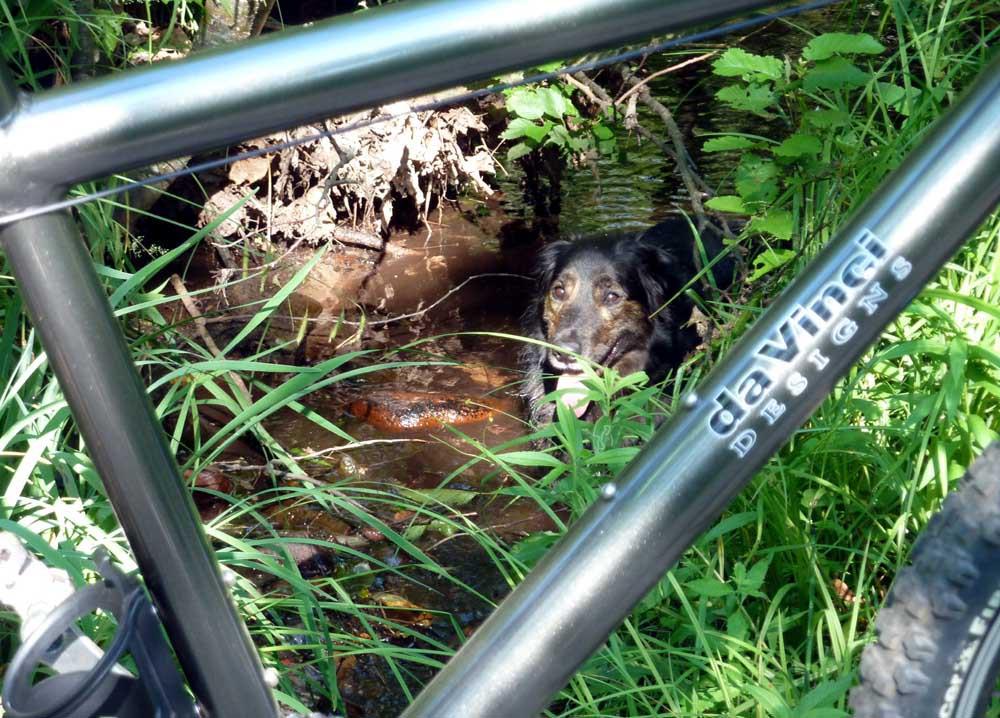 Ride da Keweenaw?-da-silver-bullet-cr-spring-creek-gromits-cools-dl-.jpg