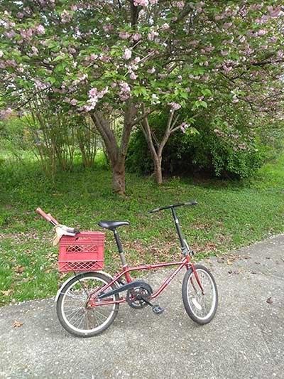 OCC Bike Thread V14-dahon_yard.jpg