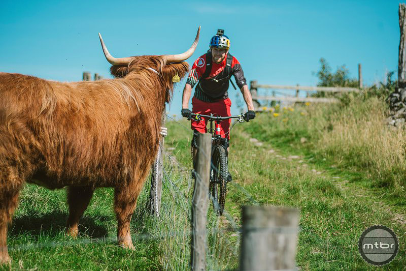 Arguably the world's most famous cyclist is helping bring the sport to the masses — and cows.