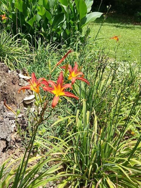Botany Thread-day_lilies.jpg