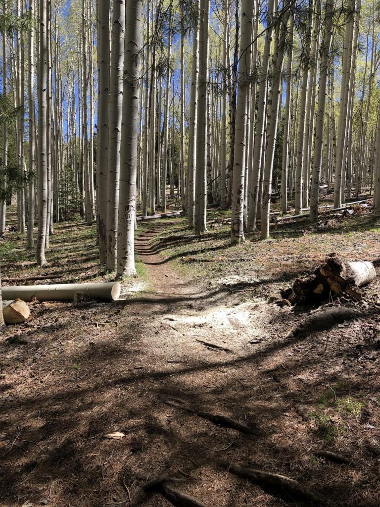 Flagstaff trail conditions.-deadfall_azt418.jpg