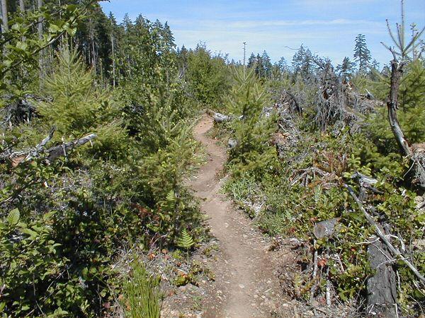 Life after a clear cut............-deadwood1-3-.jpg