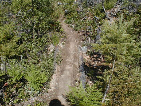 Life after a clear cut............-deadwood2-2-.jpg