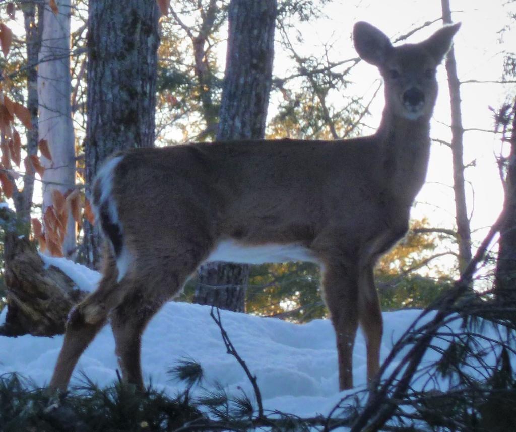 How was your commute today?-deer.jpg