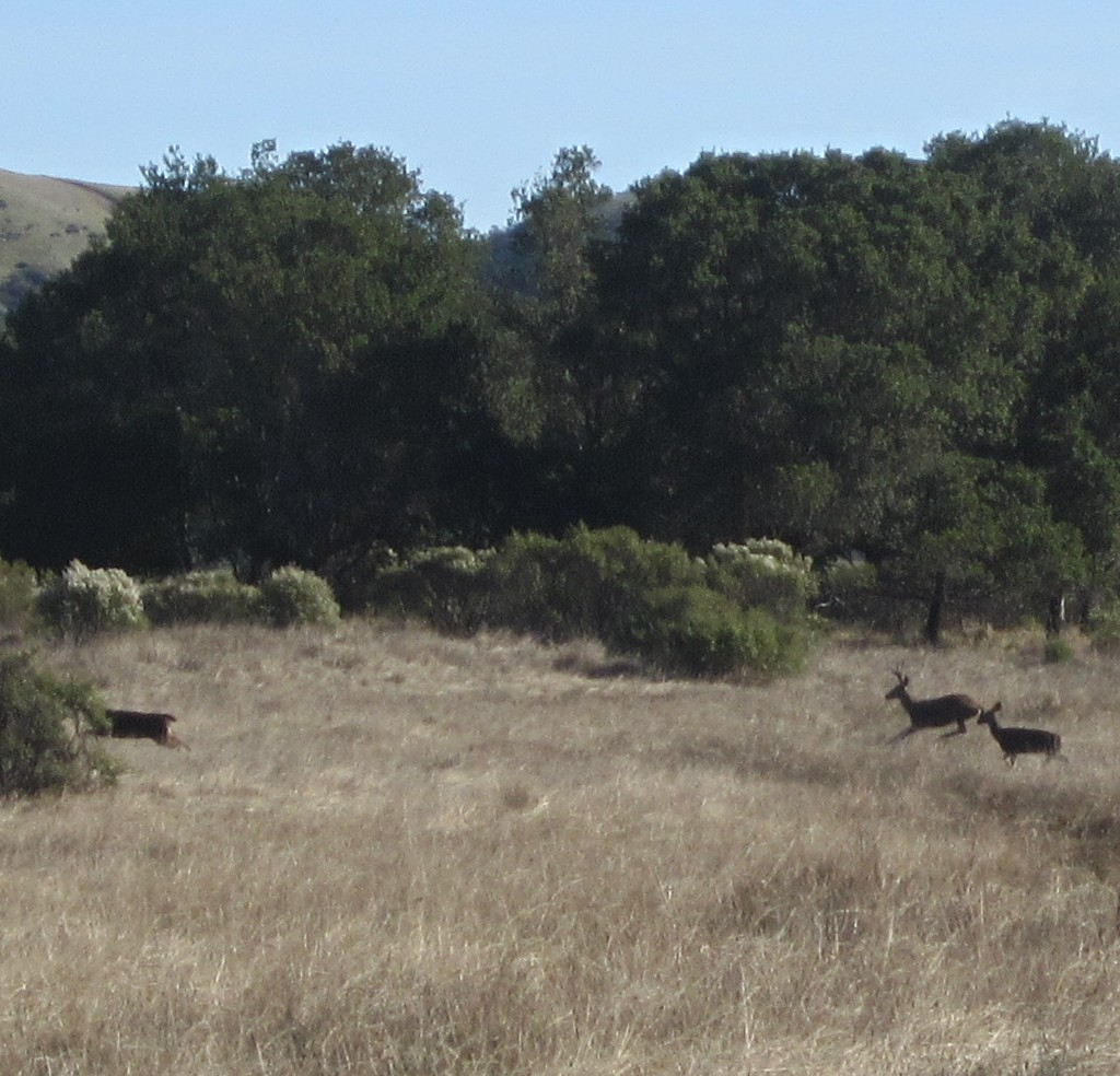 Wildlife you have seen on trail...post your pics...-deer.jpg