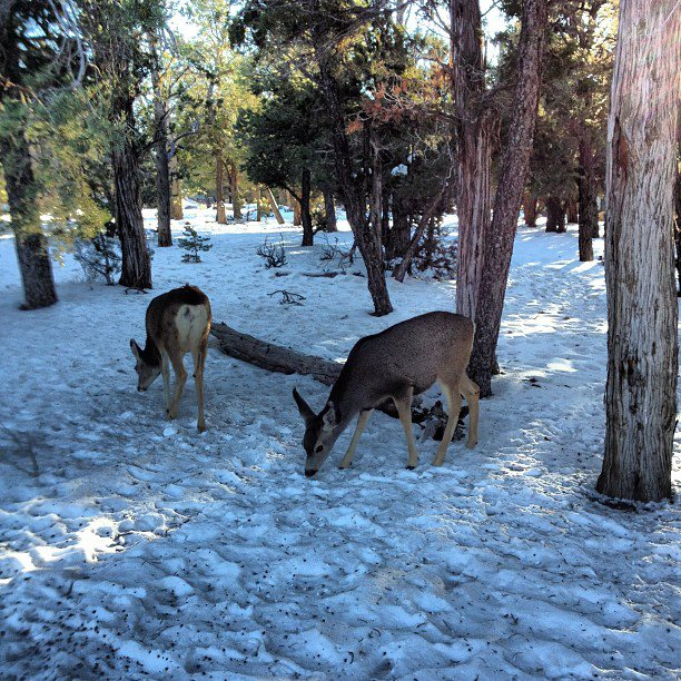 First 2013 Friday-deer.jpg