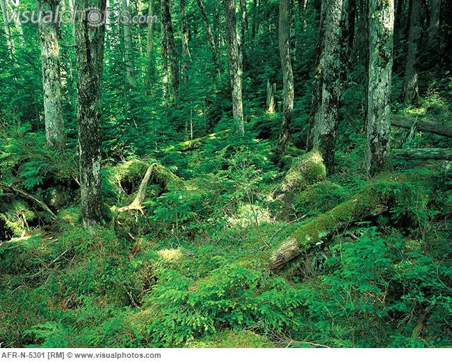 Dumbing down/sanitizing trails.-dense_forest_with_ferns_afr-n-5301.jpg