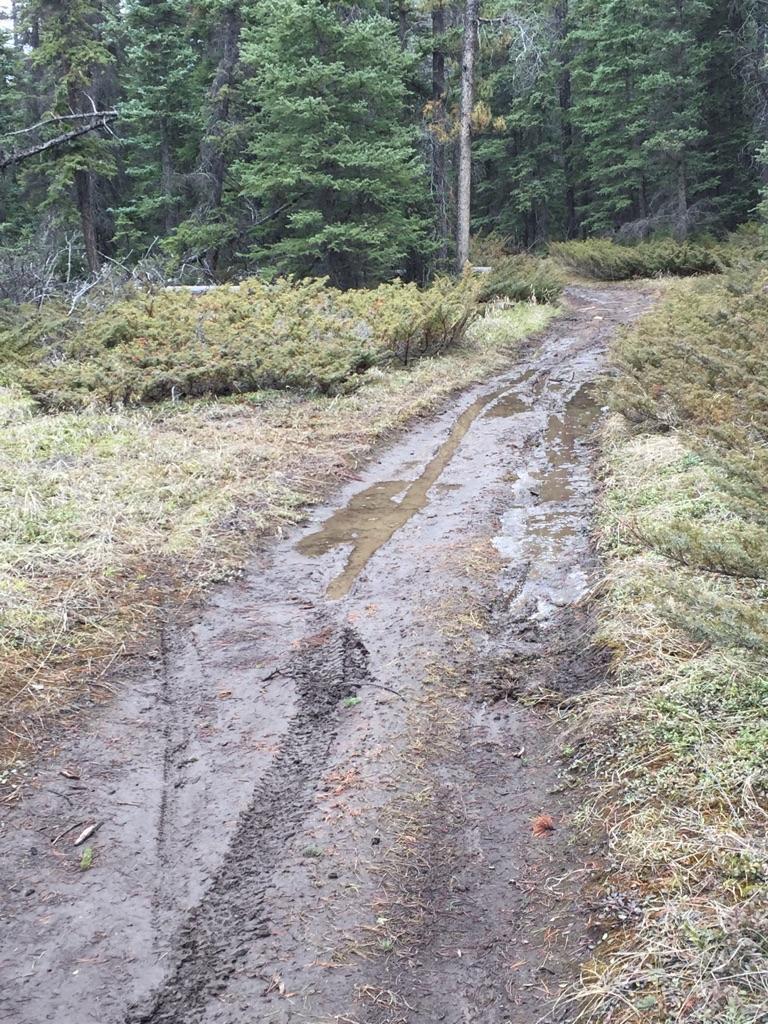 XC Riding in Jasper, Alberta-dirty-trails.jpg