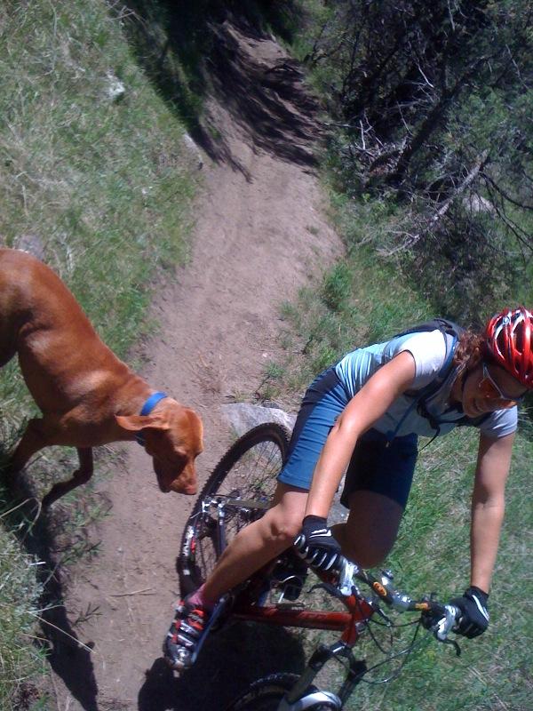 "The ""OFFICIAL"" dog off leash thread-dodger-n-riding-2.jpg"