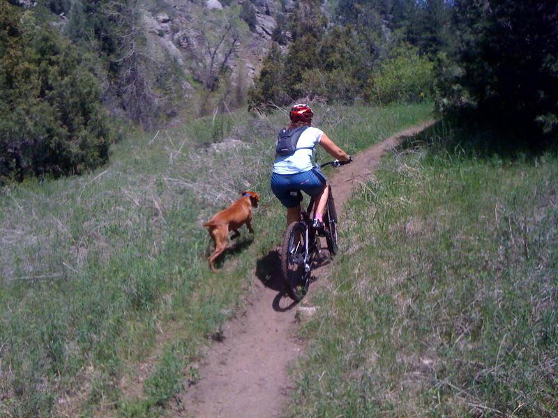 "The ""OFFICIAL"" dog off leash thread-dodger-n-riding.jpg"