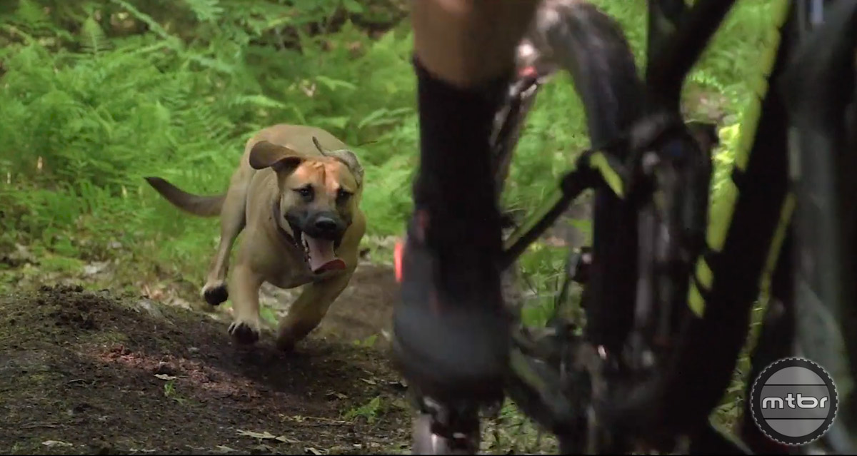 Adam Morse delivers a strong performance in the role of rider, but it's his four legged friend Flow who steals the show.